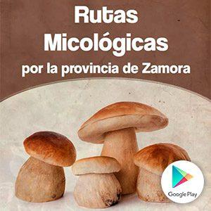 app_rutas_micologicas